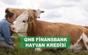 QNB Finansbank Hayvancılık Kredisi Şartları ve Faiz Oranı Nedir?