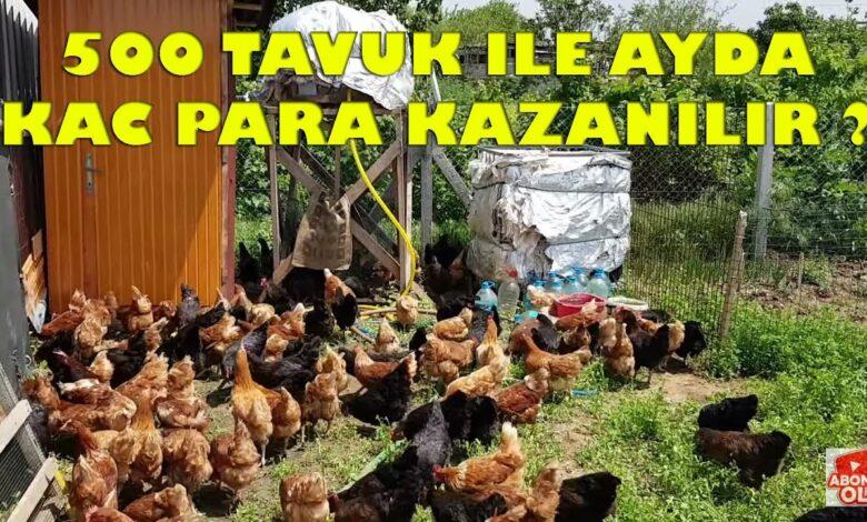 500 Gezer Tavukla İşi İle Aylık Kaç Lira Para Kazanırsınız