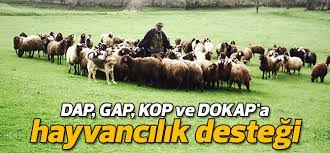 GAP,DAP, KOP ile DOKAP Hayvancılık Destekleri