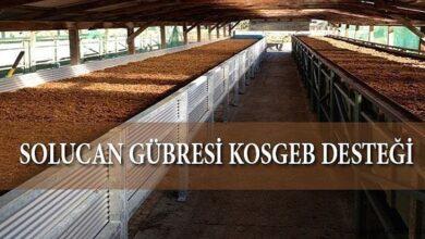 Solucan Gübresi Üretimine KOSGEB Devlet Desteği