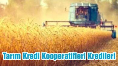 Tarım Kredi Kooperatifi Kredileri